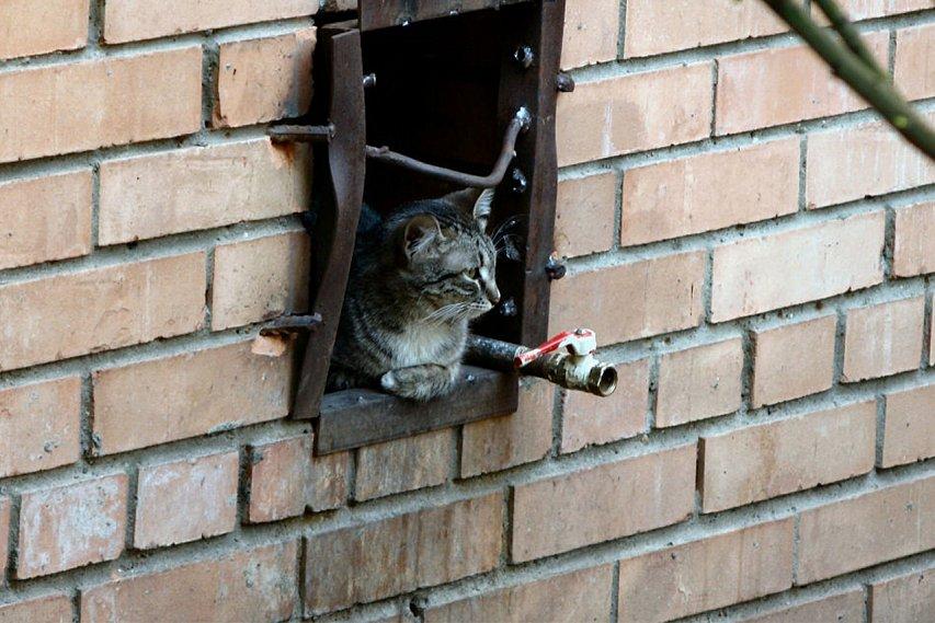 Застройщиков вынудят делать вподвалах домов проходы для кошек