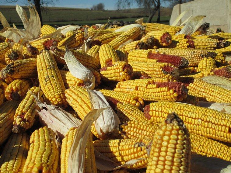 Брянские селяне собрали 1-ый млн. тонн зерна